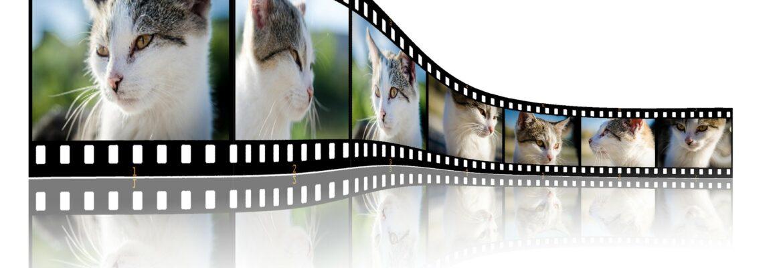 Movies/Vides